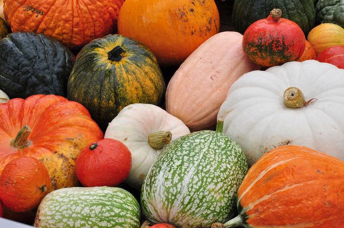 Green Color Orange Pumpkins Colored Pumpkins Decorative Gourd Food And Drink Freshness Gourds Halloween Multi Colored Orange Color Pumpkin Red Color Vegetable