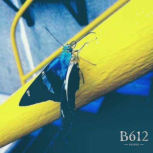 Wednesday Mornings Beautiful Blue Buterfly B612 CaptureTheMoment Wait Blur Vine Vintage Lgcamera Goodeffect Goodmoments Goodlife Simple Artist Insects