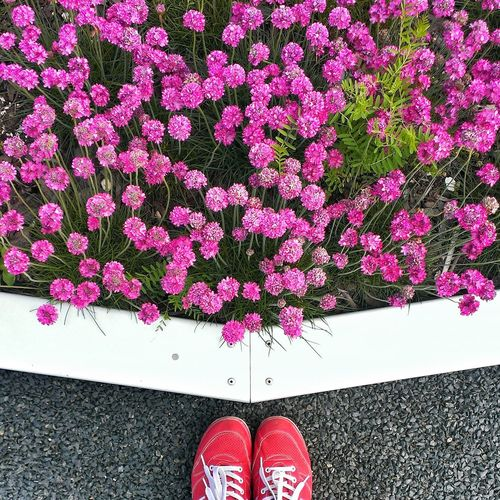 Low section of woman standing by pink flowers