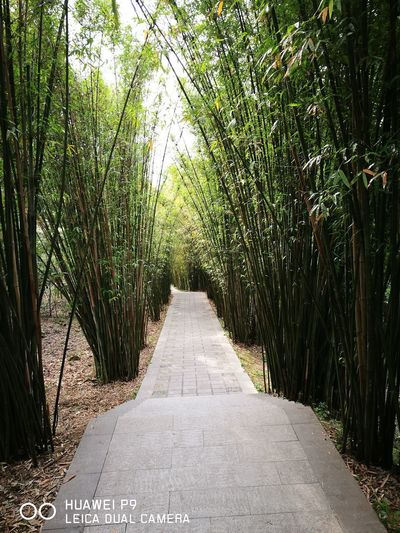 The Way Forward Day Growth Tree Nature No People Outdoors Road Beauty In Nature Bamboo Forest Beauty In Nature