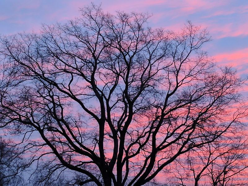 Tree Sky Beauty In Nature Nature Pink Color Branch No People Bare Tree Cloud - Sky Dawn Low Angle View Outdoors Day Sunrise Silhouette Silhouette Of Tree Silouette Ladyphotographerofthemonth Clouds Trees Sunset Cloud And Sky Tree Trunk Tree And Sky Treetop First Eyeem Photo EyeEmNewHere