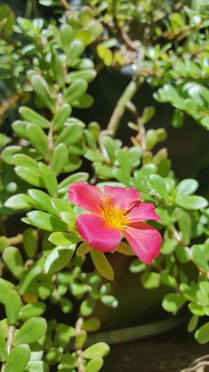 naturaleza ❤ Flower Head Flower Water Leaf Pink Color Petal Summer Close-up Plant Green Color