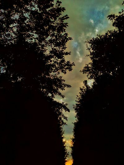 Nightfall Forestwalk Colour Of Life