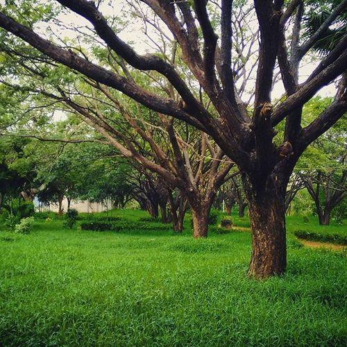Pondicherryuniversity Pondi Pu
