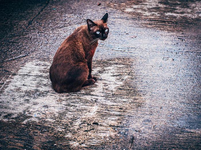 Cat sitting in a water