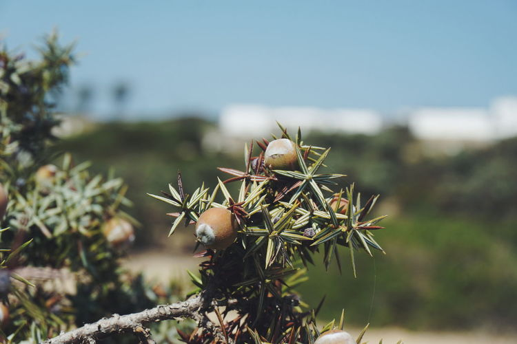 Branch Berries Branches Green Nuts Tree Trees Animal Themes Beauty In Nature Berry Branch Close-up Day Focus On Foreground Freshness Greece Growth Nature No People Nut Outdoors Plant