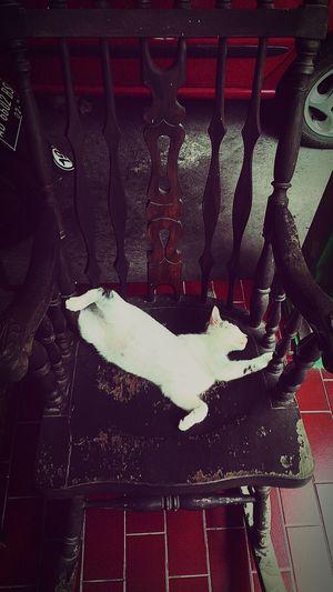 The Chair Life Hi!Enjoying Life Relaxing Sleeping Cat