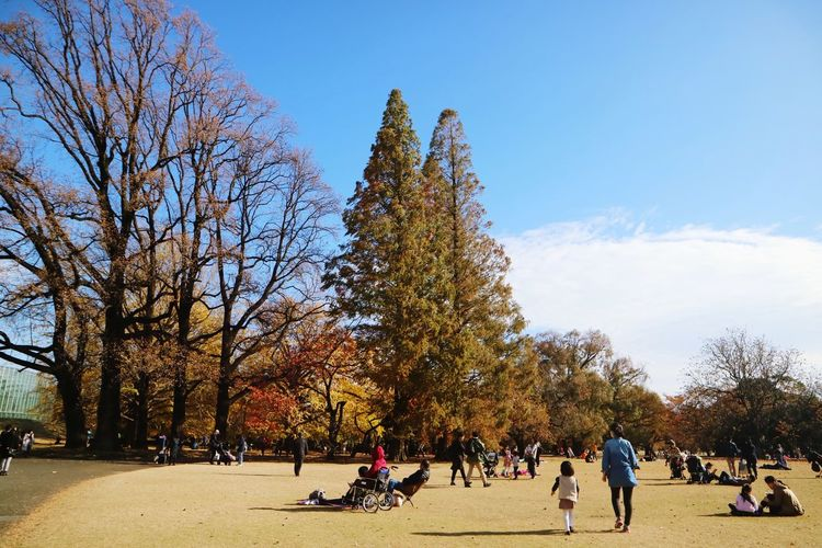 People walking in park during autumn