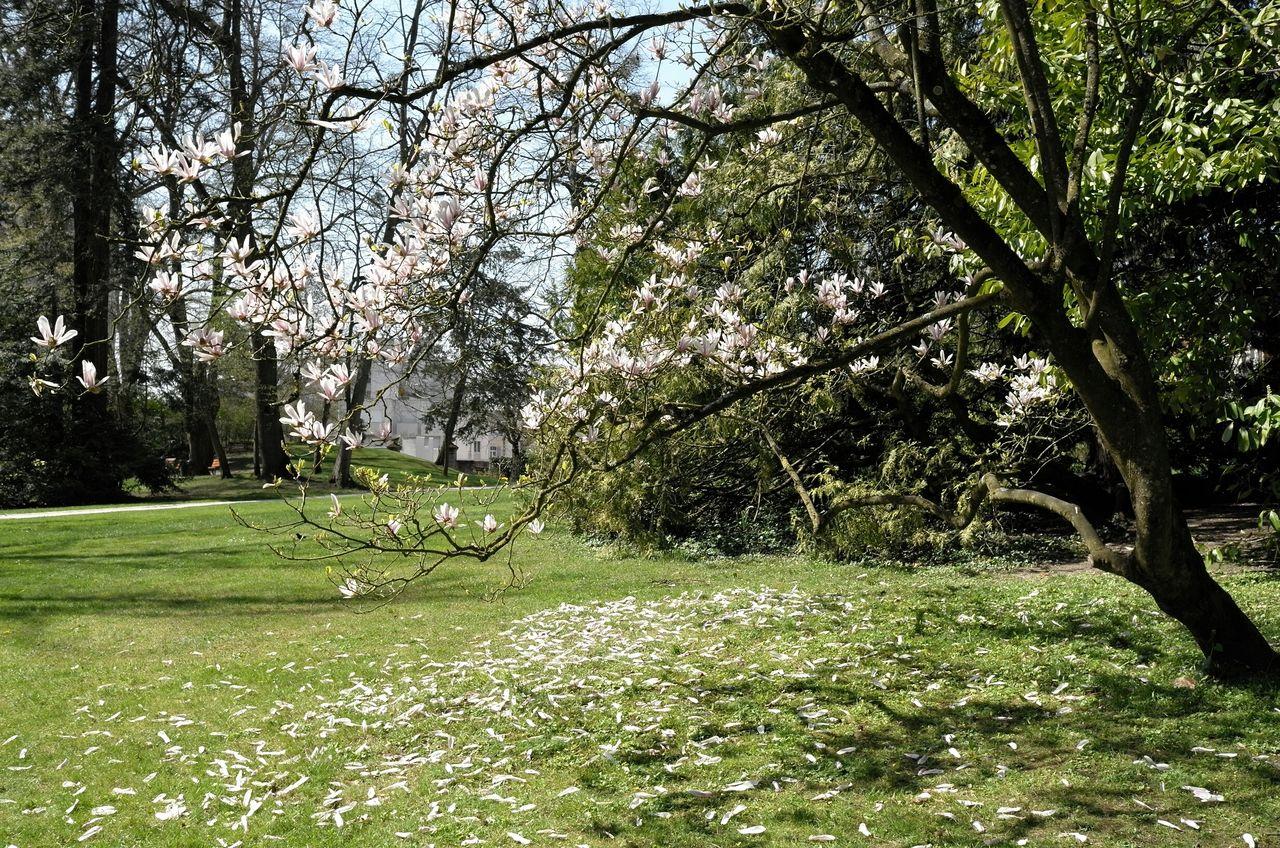 Trees On Grassy Field