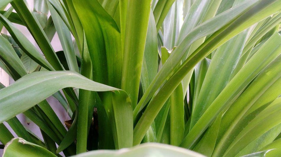 Wallpaper Wallpaper Photography Mobile Photography Outdoors Leaves Plants SSClicks SSClickpix SSClickPics