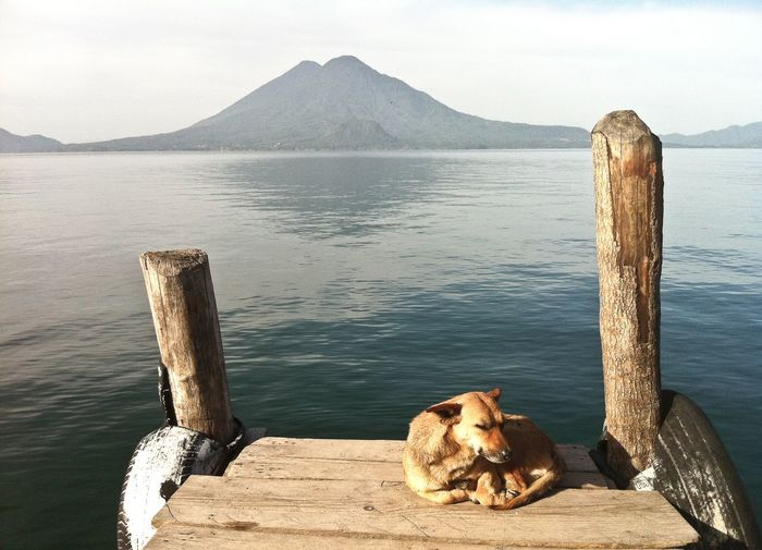 Dog relaxing on wooden post by sea