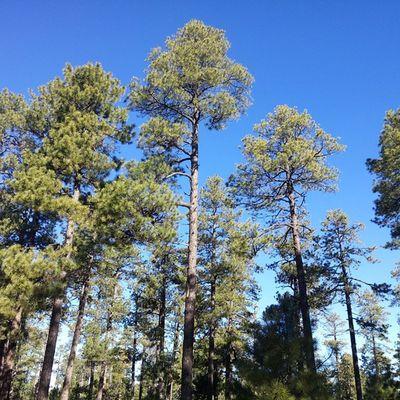 Flagstaff AZ Tree Sky
