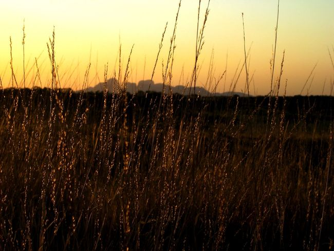 The golden glow of sunset at Kata Tjuta, turns the wild grass into threads of gold! Mystical Golden Golden Thread Alchemy Magical Gold Kata Tjuta Beauty In Nature Day Field Grass Landscape Nature No People Outdoors Plant Rural Scene Scenics Sky Sunset Tranquil Scene Tranquility EyeEmNewHere An Eye For Travel