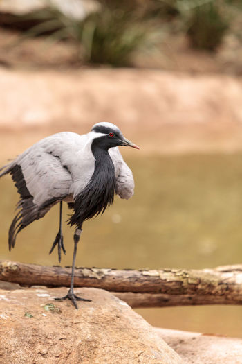 Close-up of bird perching on rock by lake