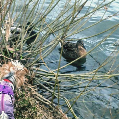 Water Duck Dog Animal Wildlife Nature HANT