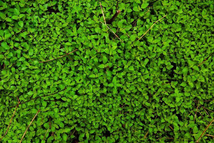 Vegetation Green Greenery Saveourgreen Green Color Green Background Harmony Green Leaf Leaves Healthy Grass Botanical Vegetation