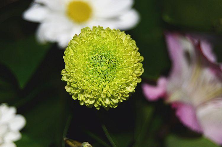 Nature Vscocam Flowers Eye Em Nature Lover