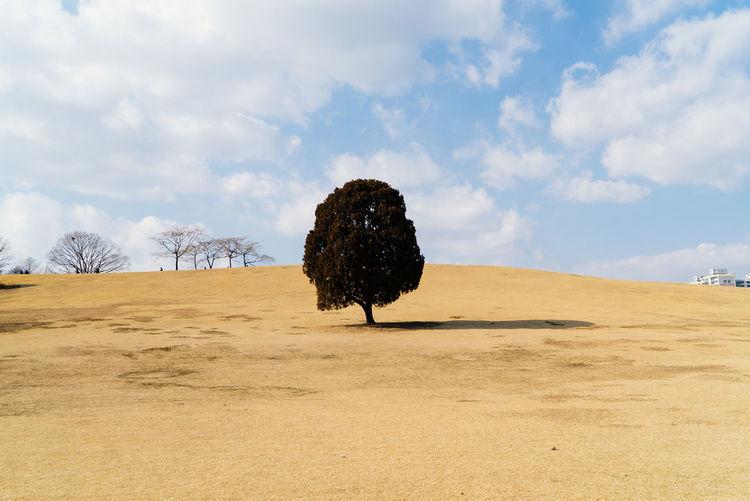 Tree growing on field against cloudy sky