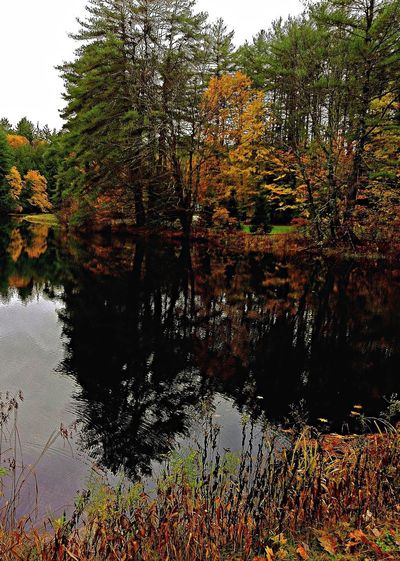 'Autumn in New Hampshire 7.5.3' ... Water Reflections Autumn Colors What Does Peace Look Like To You? Autumn IPhoneography Drimagez