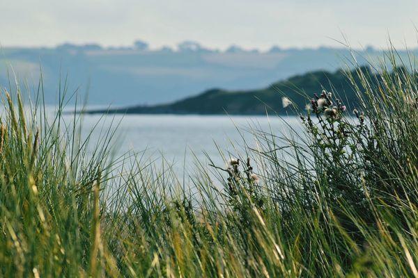 EyeEm Selects Nature Grass Dunes Summer Bestoftheday Coastline Photooftheday Beauty In Nature No People Water Scenics Outdoors Tranquil Scene Day Lake Tranquility Beauty In Nature Growth Sky Plant Bird