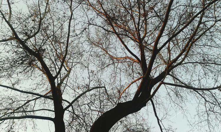 Aşkgökyüzünde Winter Nature