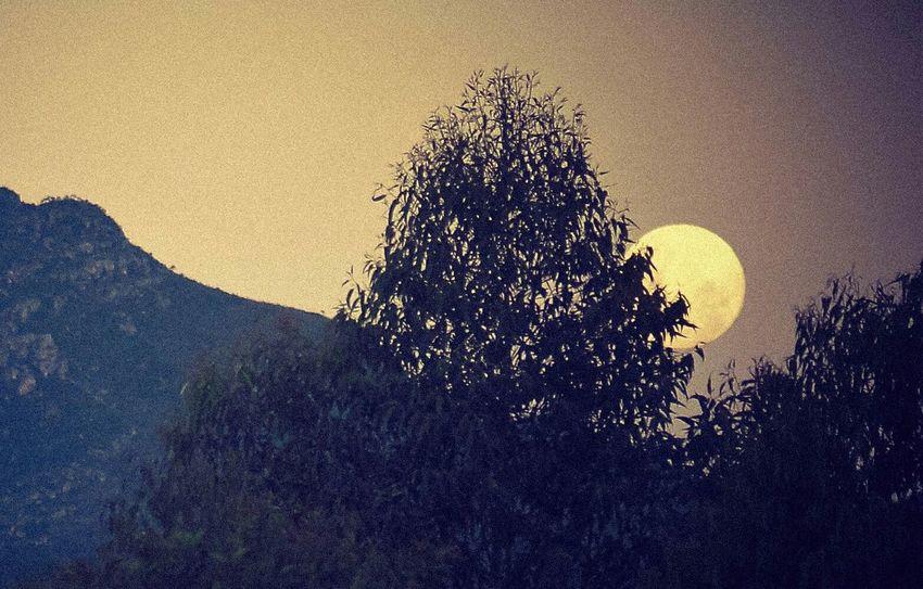 moon light Astronomy Tree Silhouette Sky Half Moon Space Exploration Moon Moon Surface Growing Full Moon
