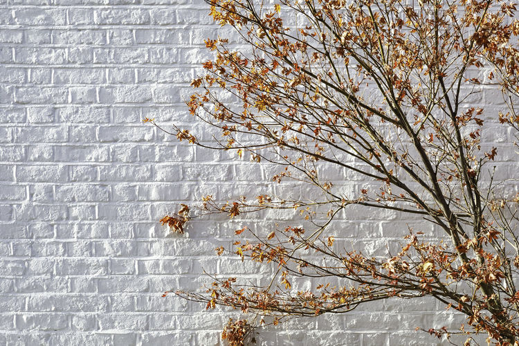 Autumn in London Plant Tree Branch Built Structure Architecture Wall - Building Feature No People Growth Day Flower Building Exterior Nature Fragility Beauty In Nature Brick Wall Brick Low Angle View Flowering Plant Outdoors Close-up Springtime Change London Travel Destinations Autumn