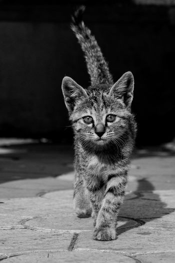 Cat Kitten Cat Walking Cat Face Face Looking At Camera Cat Looking At The Camera Leopard Domestic Cat Sand Animal Themes Tail Cat Stray Animal Kitten Pet Bed Ginger Cat Tabby Cat Whisker My Best Photo The Art Of Street Photography