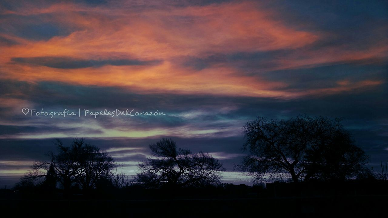 tree, cloud - sky, dusk, sky, text, no people, silhouette, outdoors, nature, communication, tranquility, beauty in nature, low angle view, sunset, scenics, night