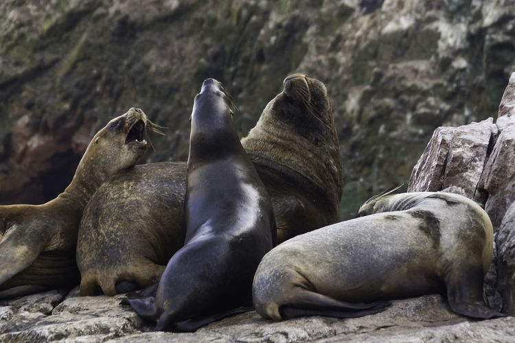 Seals relaxing outdoors
