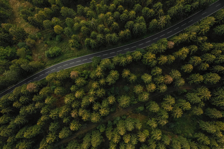 Aerial view of a forest and a country road Autumn Copy Space Country Curve Drone  Moving Nature Road Rural Transportation Travel Tree View Aerial Aerial View Background Countryside Forest Germany Highway Landscape Outdoor Pine Tree Season  Summer