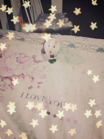 My Baby Babygirl Beautiful Animal Cute Little Princess Fat love u, so much. Geovana Baby ?