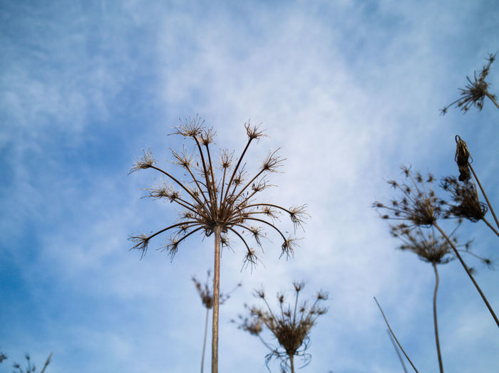 The flower looks toward the blue sky