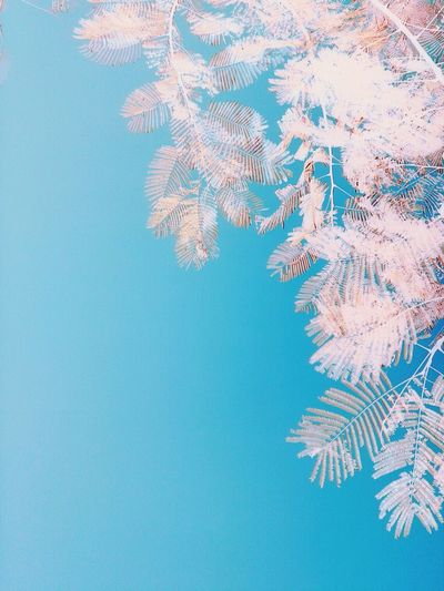 The unseen Infrared Eyeem Philippines EyeEm Best Edits Potpotography