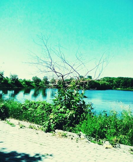 Mluniv Summer Views