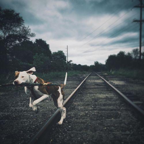 Dogs #train Tracks Urban happy dog