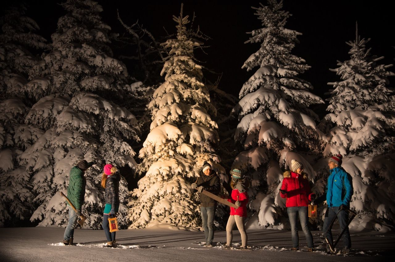 group of people, full length, men, tree, real people, night, nature, medium group of people, women, plant, holiday, leisure activity, people, adult, group, walking, cold temperature, lifestyles, rear view, celebration, outdoors