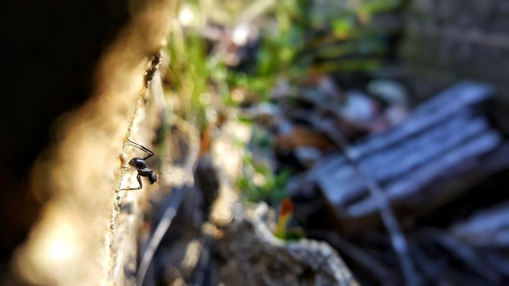 Insect One Animal Animal Themes Outdoors No People Close-up Ant Lonesome Australian Outback Australian Bush EyeEmNewHere EyeEm Nature Lover EyeEm 2018