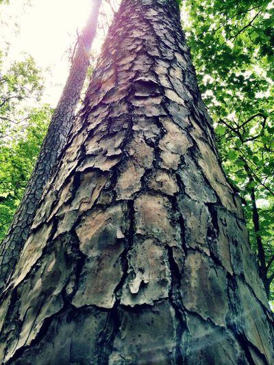 Tree trunk Tree Bark Sun Light