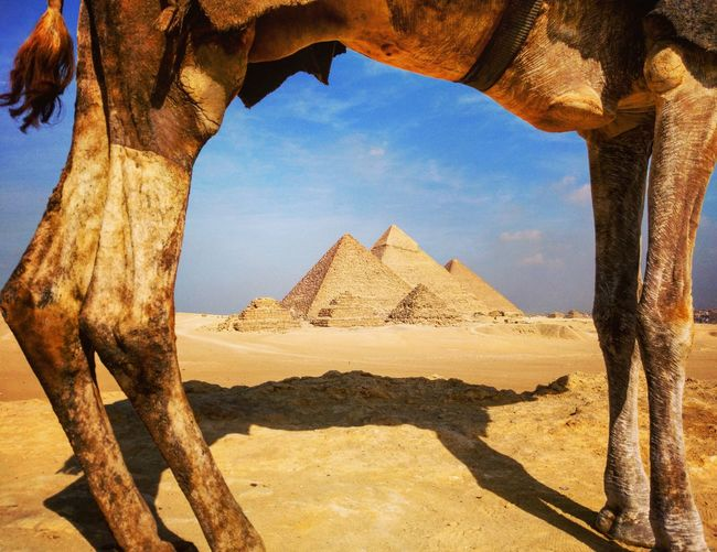 Egypt Cairo Camel Pyramids Giza