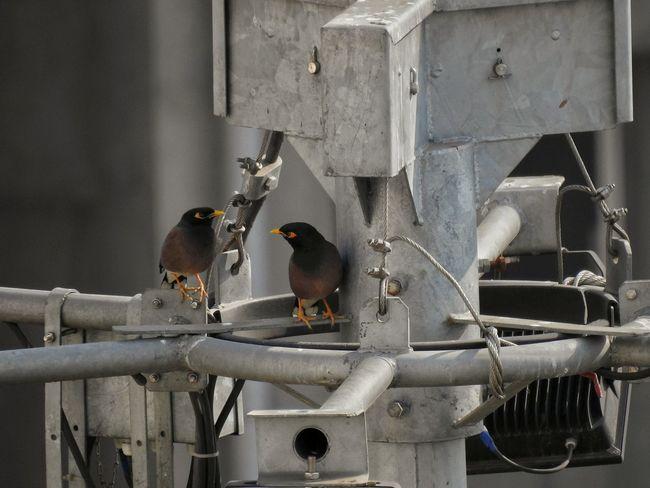 Shadows & Lights Pair No People Day Outdoors Bird Close-up Animal Themes