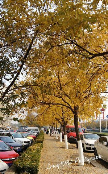 Yellow Leaves Autumn Autumn Leaves Autumn Colors Colors Of Autumn