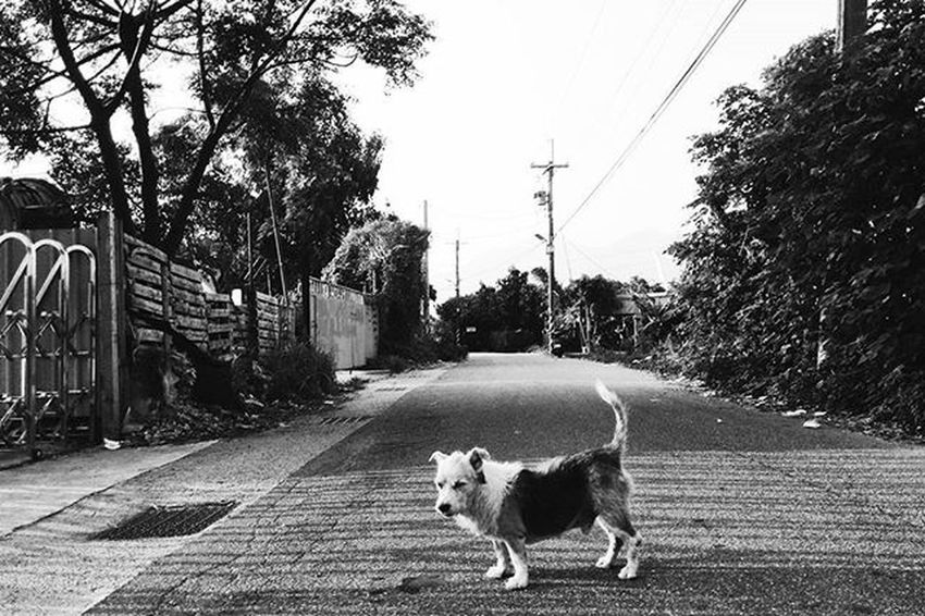 晚安世界,good bye August. 再見了,八月的自己。 Vscocam Photooftheday Quote Xhinmania Instadaily Follow4follow Streetphotography Puppy