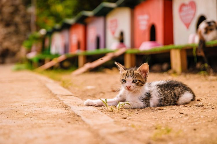 Close-Up Of Cat With Beach Huts In Background