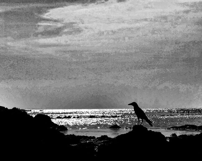 EyeEmNewHere I am new here lonely crow Silhouette Sea No People Bird L Am Lost B&w Nature Live For The Story