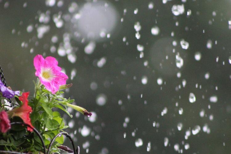 Flowers Rain Taking Photos Frontporch Nature Flower