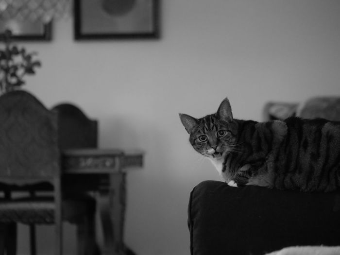 Portrait of a cat sitting at home