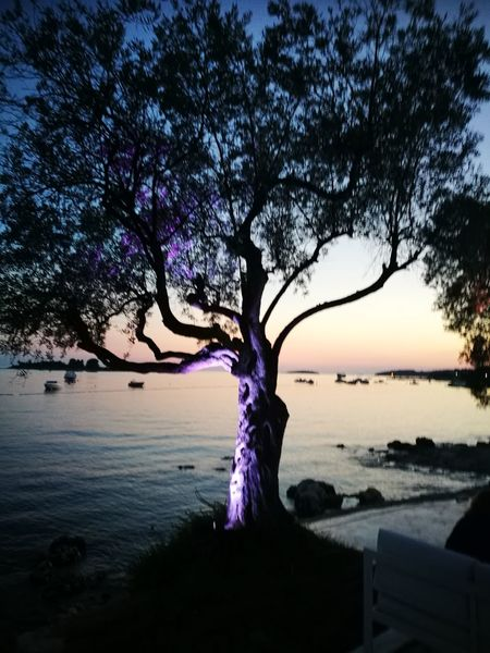 Sunset over Rovinj, Croatia Tree Water Sunset Sea Purple Sky Horizon Over Water Landscape The Traveler - 2018 EyeEm Awards
