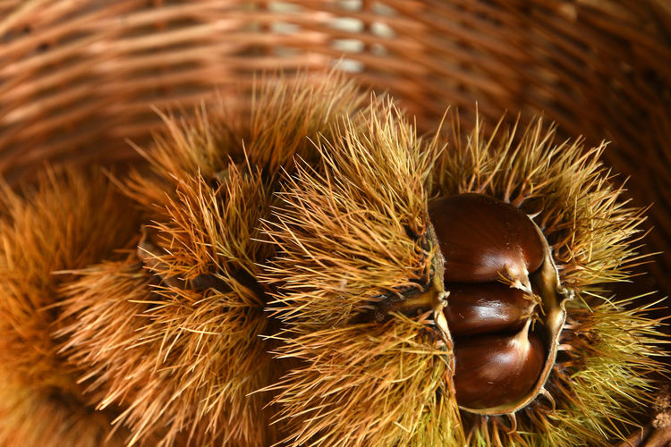 Close-up Brown