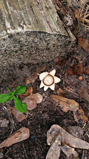 Mushroom that looks like a flower, outside, no people Day Leaf Outdoors High Angle View No People Sand Close-up